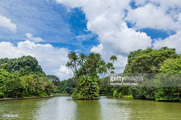 singapore botanic gardens - singapore botanic gardens stock photos and pictures