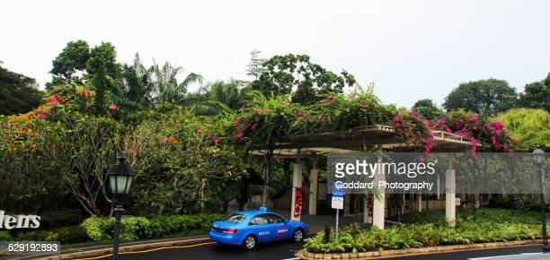 singapore: botanic gardens - singapore botanic gardens stock photos and pictures