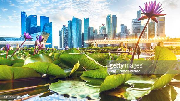 singapore, evening at marina bay - singapore city stock pictures, royalty-free photos & images