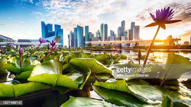 singapore, evening at marina bay - marina bay singapur stock-fotos und bilder
