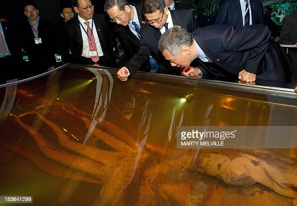 Singapore Prime Minister Lee Hsien Loong has a closer look at a giant squid during a visit to Te Papa Museum in Wellington on October 8 2012 Lee...