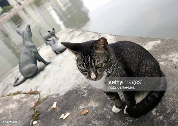 A street cat sits next to a bronze statue of Kucinta along the Singapore river 26 April 2006 Kucinta as a national cat and tourist icon was...