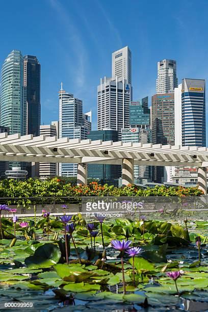 singapore skyline on sunny day - pianta acquatica foto e immagini stock