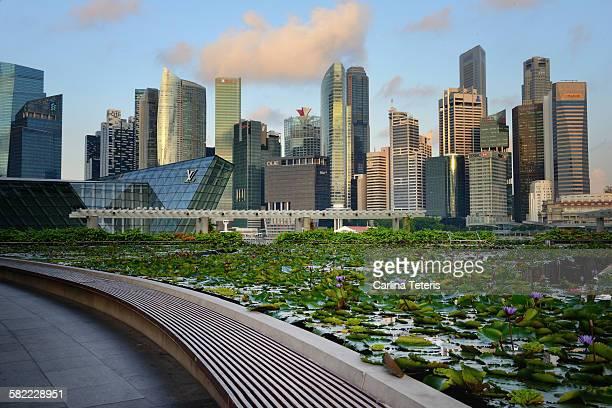 Singapore Skyline with Lotus pond