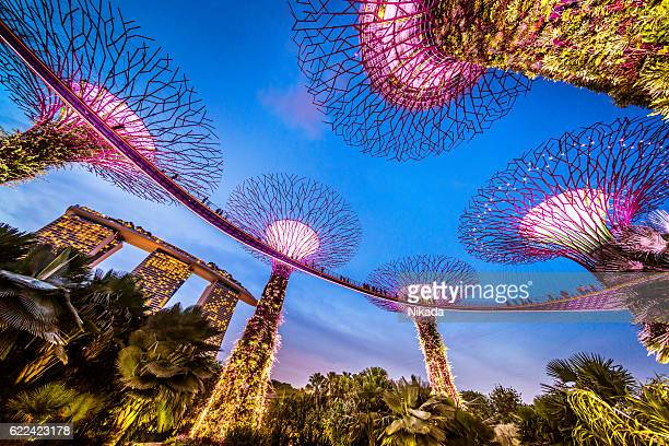 singapore supertrees and skywalk in gardens by the bay - singapore city stock pictures, royalty-free photos & images