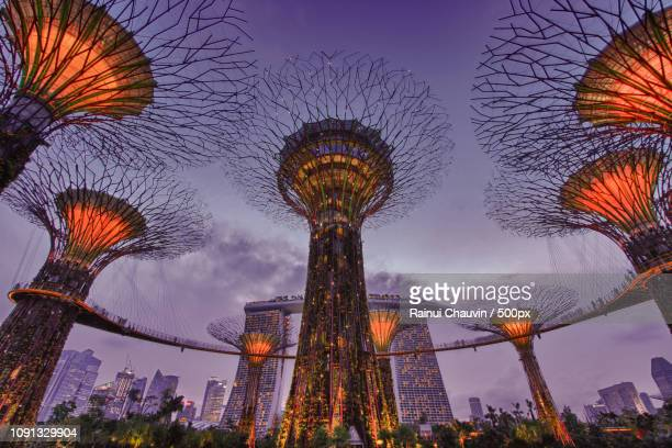 singapore supertrees - chauvin stock pictures, royalty-free photos & images