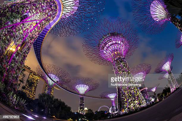 CONTENT] Singapore tourists visiting Super Tree Grove at Gardens By The Bay at dusk
