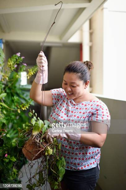 singaporean woman gardening outsider her hdb apartment - シンガポール文化 ストックフォトと画像