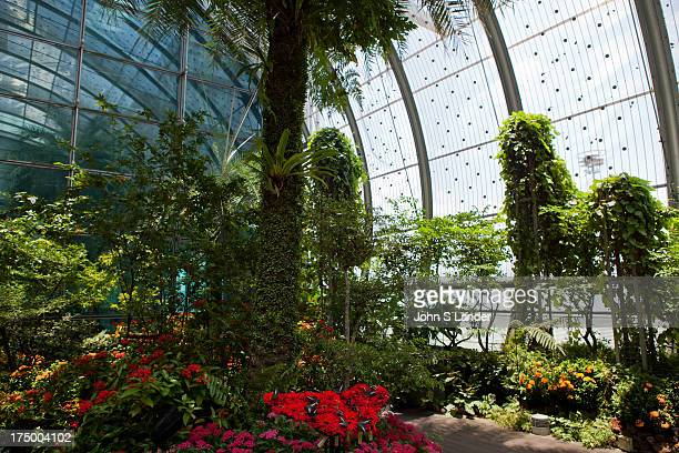 Singapore's Changi Airport Butterfly Garden is designed to be a tropical nature retreat for passengers of Changi Airport Terminal 3s to have a quick...