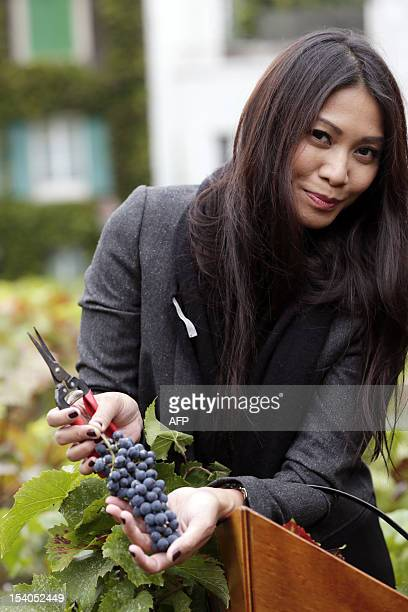 Singer Anggun collects grapes during the 79th Montmartre vineyard's harvest on October 13 2012 in Paris The Vendanges takes place every year in the...