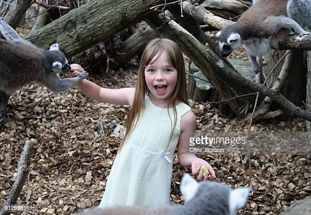 Singer Connie Talbot feeds ring tailed lemurs as she takes part in a photoshoot at London Zoo on June 25 2009 in London England