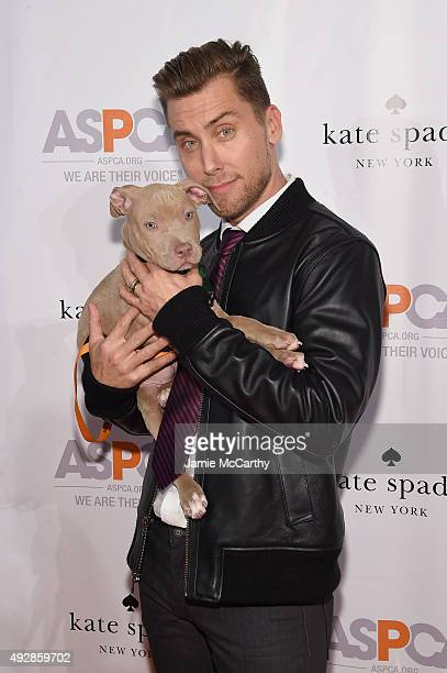 Singer Lance Bass attends the ASPCA Young Friends benefit at IAC Building on October 15, 2015 in New York City.