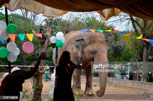 Singer performs for Kavaan, Pakistan's only Asian elephant, during his farewell ceremonybefore travelling to a sanctuary in Cambodia later this...