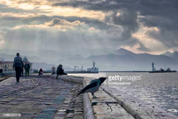 singing crow standing on the bench along the seafront,izmir. - emreturanphoto stock pictures, royalty-free photos & images