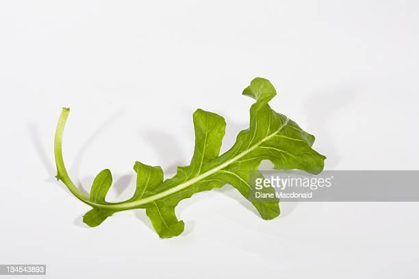Single arugula leaf