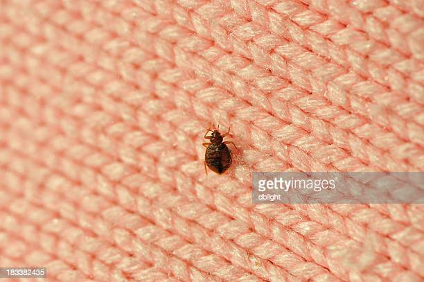 A single bed bug on a blanket fiber