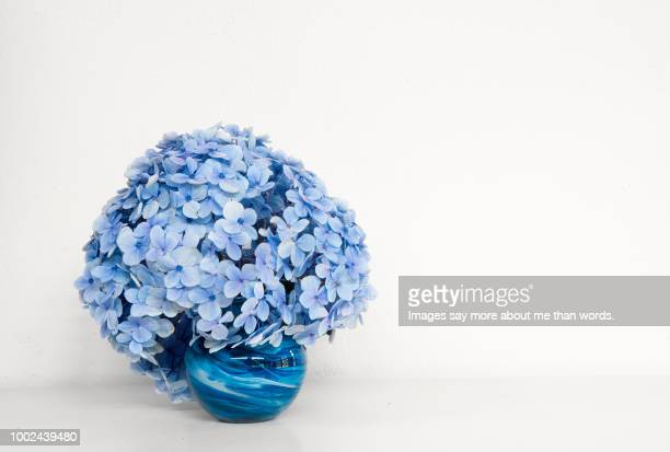 a single blue vase with a blue hydrangea against a white background. still life. - あじさい ストックフォトと画像