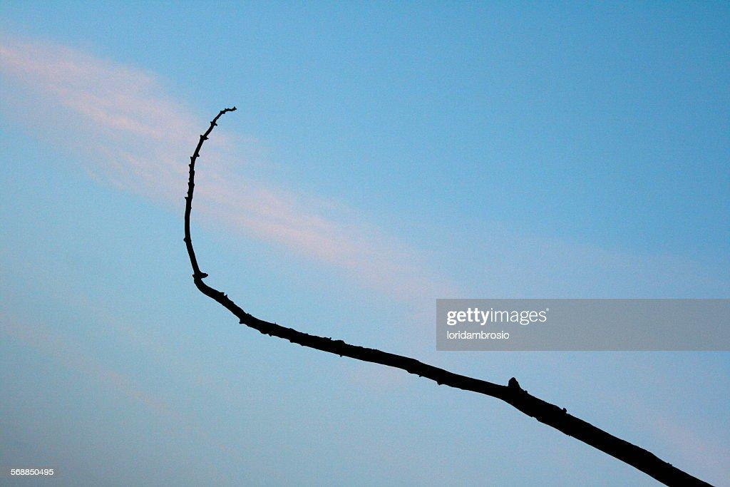 Single branch reaching/sunrise/blue sky/pink cloud : Stock Photo