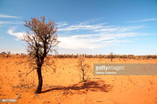 Single burnt tree in the desert, Australia