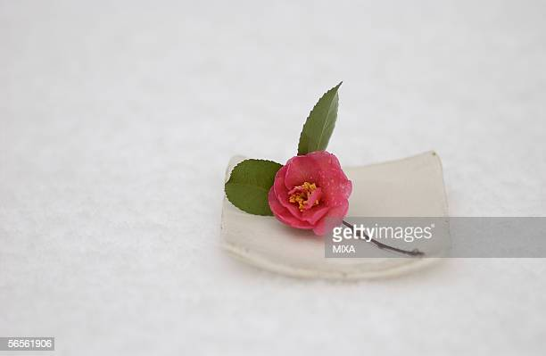 single camellia on a plate - wabi sabi stock pictures, royalty-free photos & images
