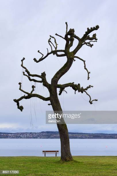 Single Chestnut tree with bench in late February, Lake Bodensee, Germany