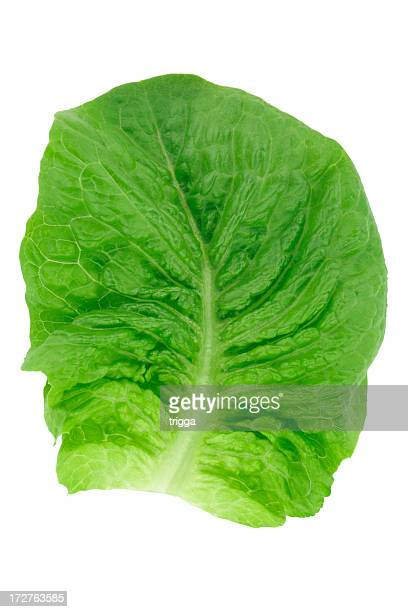 single cos lettuce leaf - romaine lettuce stock photos and pictures