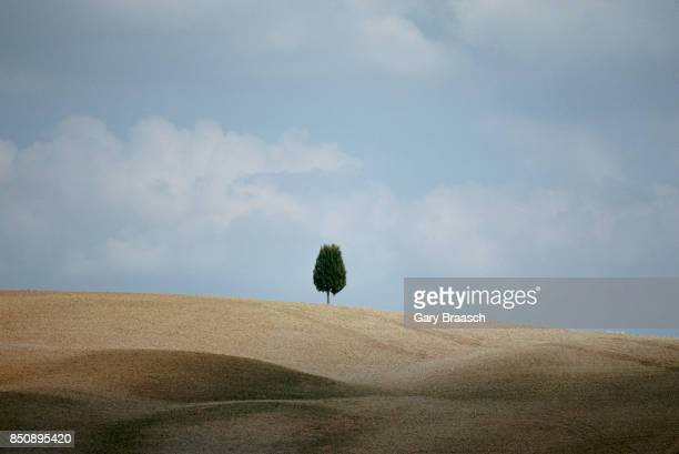 A single cypress tree stands in a golden plowed field with rolling hills near Montalcino Italy | Location Near Montalcino Italy