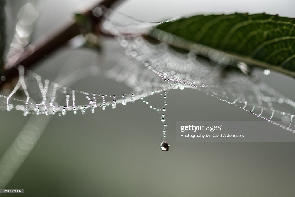 Single drop of Dew. : Stock Photo