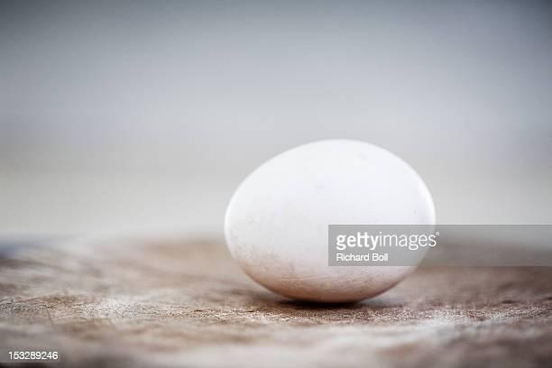 A single duck egg