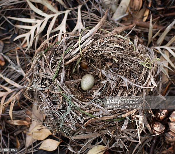 Single egg in a nest