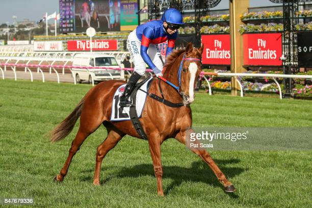 Single Gaze ridden by Kathy O'Hara before the PFD Food Services Makybe Diva Stakes at Flemington Racecourse on September 16, 2017 in Flemington,...