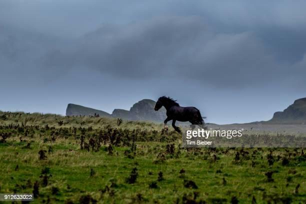 Single horse runs in beautiful landscape