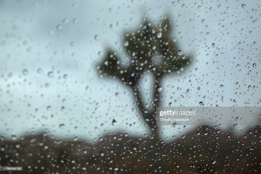 Single Joshua Tree and mountains beyond as seen through a rain splattered windshield : Stock Photo