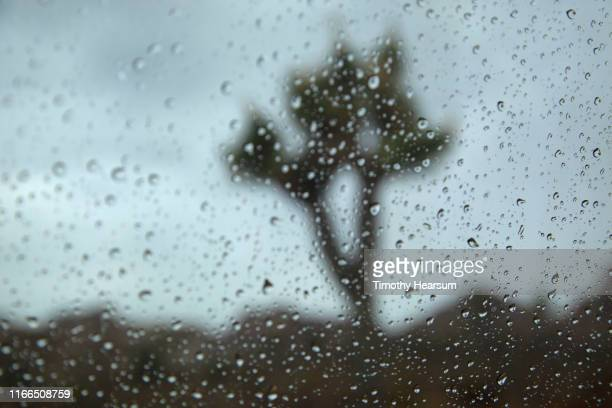 single joshua tree and mountains beyond as seen through a rain splattered windshield - timothy hearsum stock-fotos und bilder