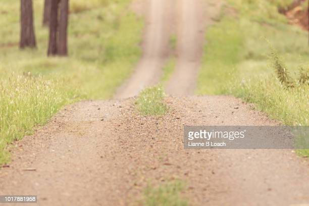 single lane dirt track down - lianne loach stock pictures, royalty-free photos & images