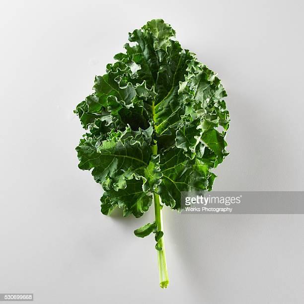 A single leaf of Kale on a white background