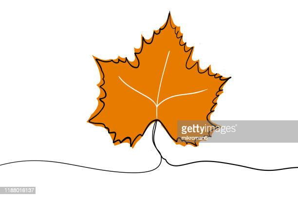 single line drawing of a leaf - leaf stock pictures, royalty-free photos & images