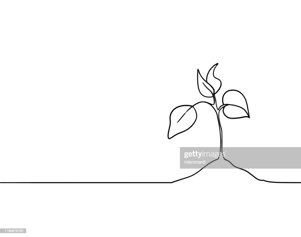 Single line drawing of a plant : Stock-Foto