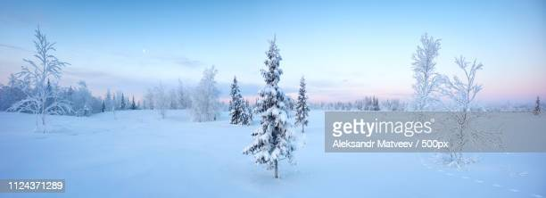 single new years fir tree in the snow winter fores - forens stock pictures, royalty-free photos & images