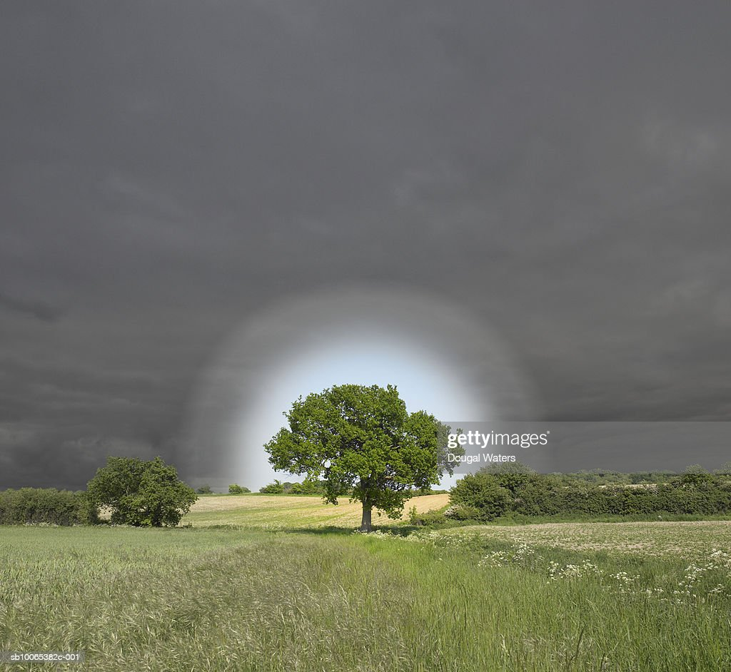 Single oak tree in field surrounded by halo : Foto stock