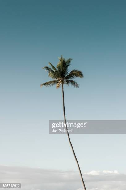 A Single Palm Tree Rising into a Clear Blue Sky