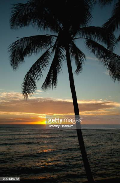 single palm tree with sun setting into the ocean - timothy hearsum ストックフォトと画像