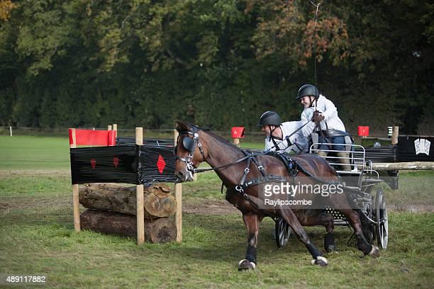 single pony carriage team negotiateing an obstacle - koets stockfoto's en -beelden