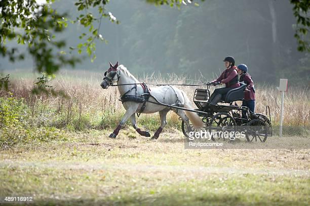 single pony carriage team - koets stockfoto's en -beelden