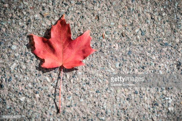 Single red maple leaf on the sidewalk