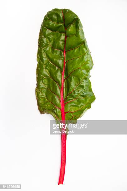 Single red-ribbed chard leaf