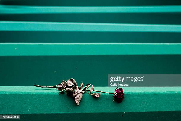 A single roase lays on a coffin on July 11 2015 at the Srebrenica Potocari Memorial and Cemetery at Potocari Bosnia During the 19921995 Bosnian War...
