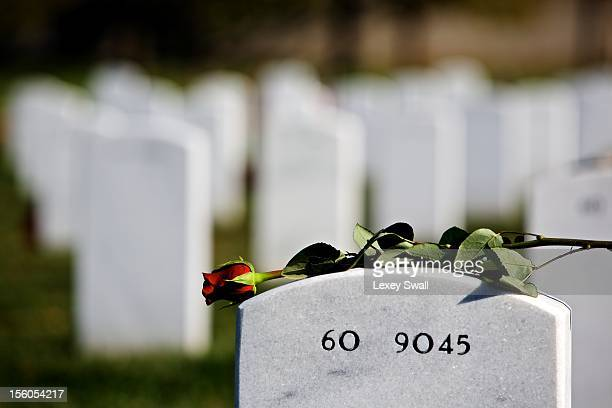 A single rose lays on the headstone of a fallen serviceman on Veteran's Day at Arlington National Cemetery on November 11 2012 in Arlington Virginia...