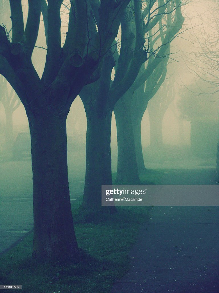A single row of trees  : Stock Photo