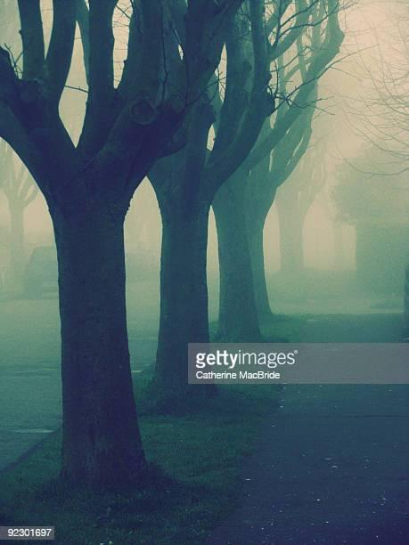a single row of trees  - catherine macbride stock-fotos und bilder